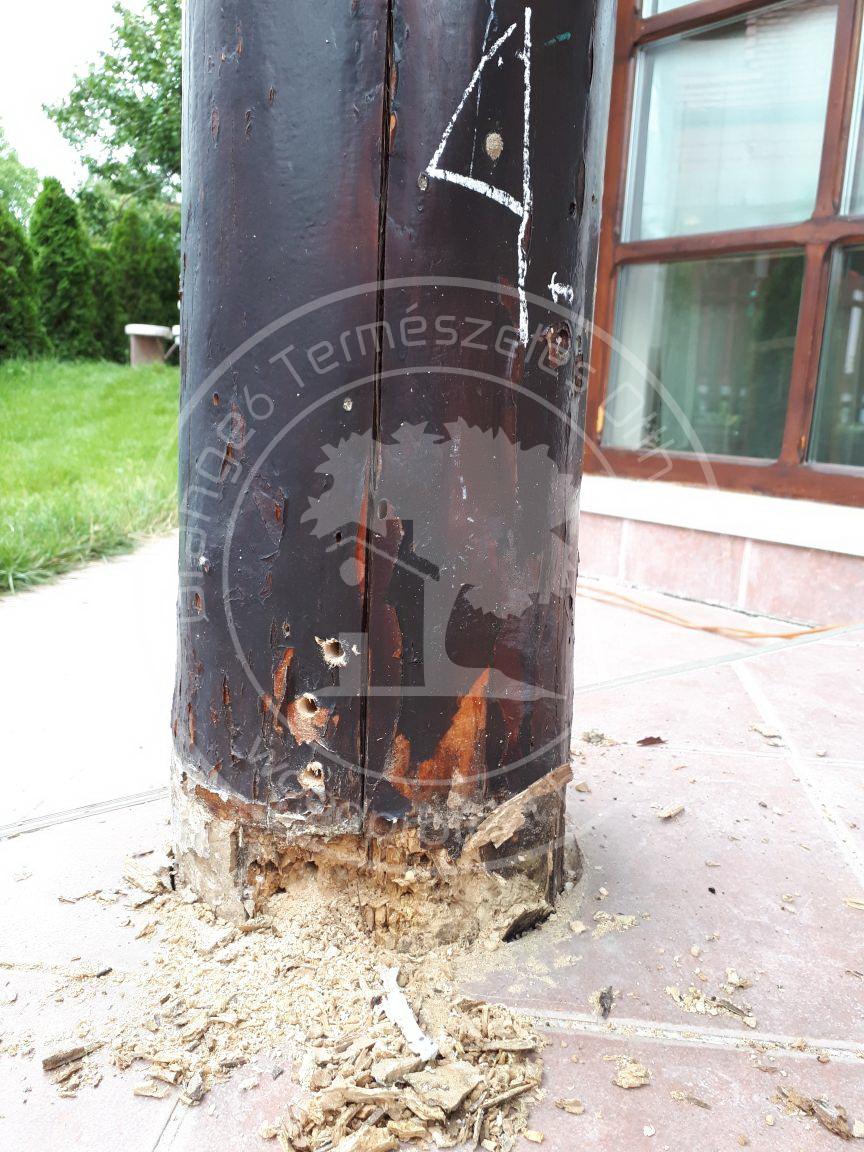 Légzésgátló bevonat, helytelen fa-beton kapcsolat.